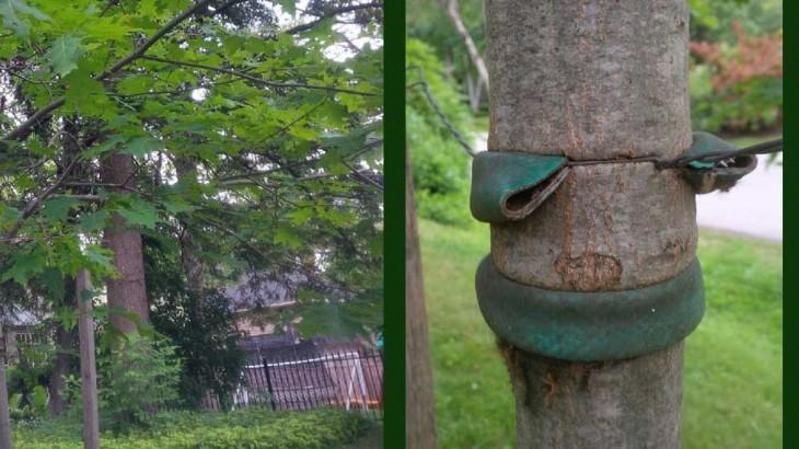 Strangled Trees rescued.