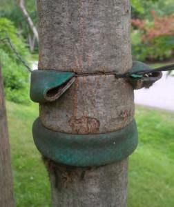 strangled_tree2